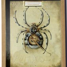 Araignée tisseuse de temps